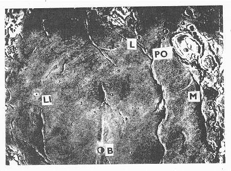 Obr. 14: Kráter Linné (LI) a jeho okolí (Mare Serenitatis). Krátery: Luther (L), Posidonius (PO), Bessel (B) a le Monier (M). Linné na spojnici kráterů le Monier a Archimedes. P. m. B.