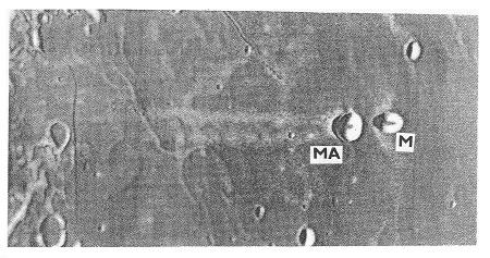Obr. 15 Krátery Messier (M) a Messier A (MA) v oblasti Mare Foecunditatis. Jejich průměr je 11 a 13 km. P. m. A.